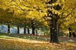feuilles tombant