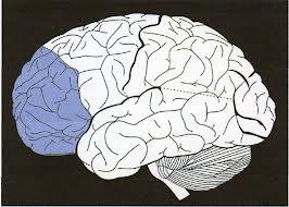 préfrontale